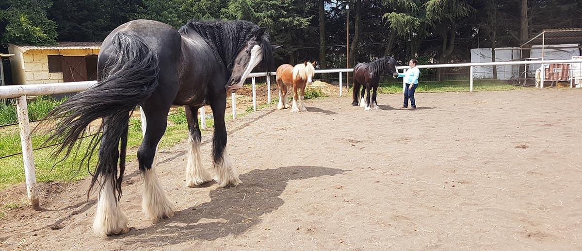 Horstellations constelaciones asistida con caballos terapia DF coaching - programas establecidos